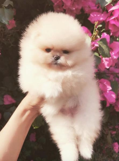 Kim Kardashian gifted North a puppy for her birthd